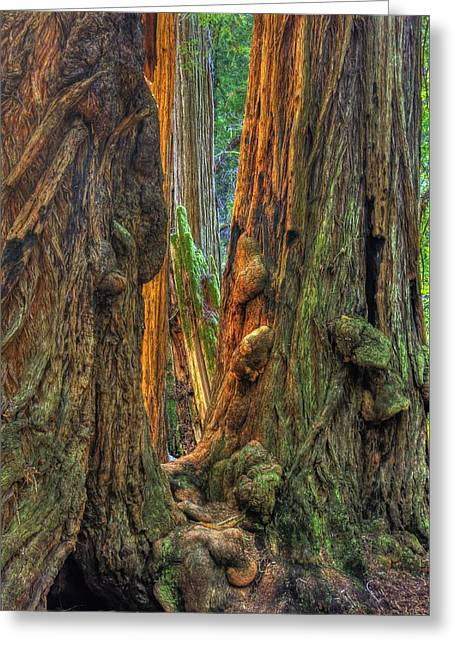 Golden Light Reaches The Grove Floor Muir Woods National Monument Late Winter Early Afternoon Greeting Card by Michael Mazaika