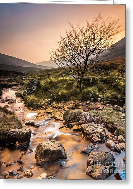 Golden Light River Greeting Card