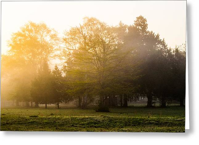 Golden Light Greeting Card by Shelby  Young