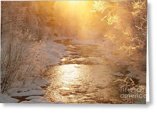 Golden Light Greeting Card by Sylvia  Niklasson