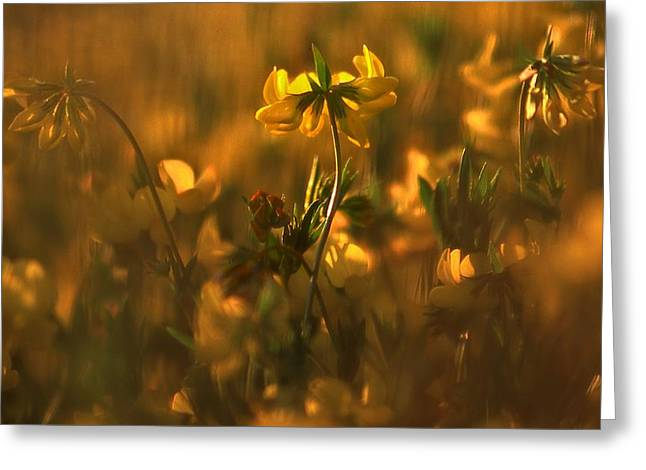 Golden Light Greeting Card by Thomas Born