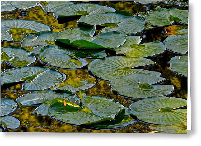 Golden Lilly Pads Greeting Card