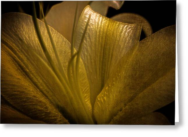 Golden Lily Greeting Card by Dave Garner