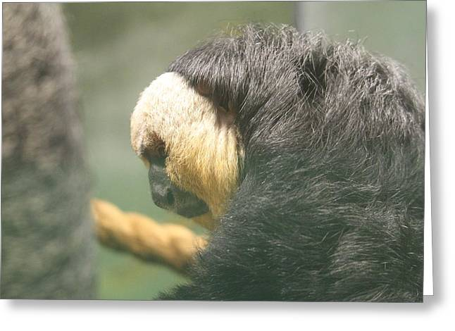 Golden Lion Tamarin - National Zoo - 01138 Greeting Card by DC Photographer