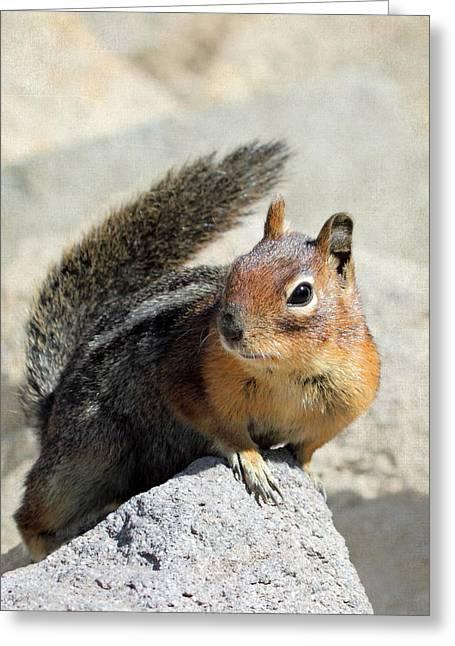 Golden Mantle Ground Squirrel Greeting Card