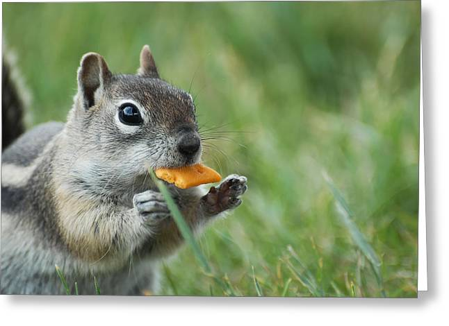 Greeting Card featuring the photograph Golden-mantled Ground Squirrel by Susan D Moody