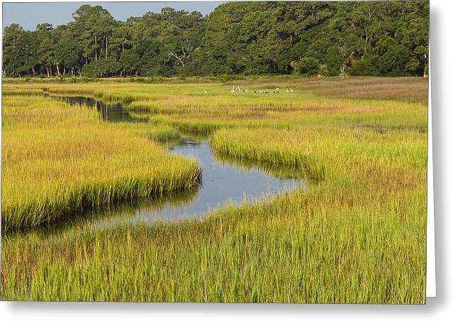 Golden Marsh Greeting Card by Patricia Schaefer