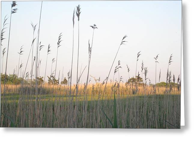 Golden Marshes Greeting Card