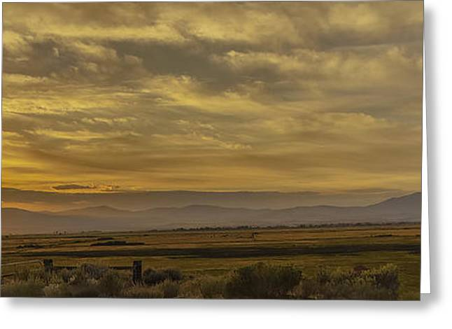 Golden Morning Greeting Card by Nancy Marie Ricketts