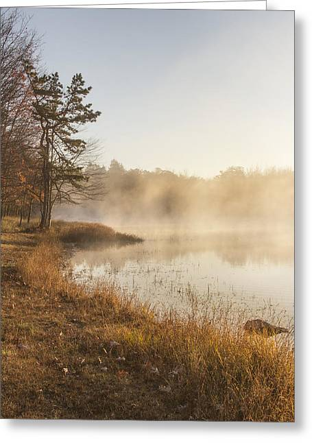 Golden Morning Greeting Card by Yelena Rozov