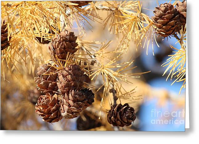 Golden Needles Greeting Card
