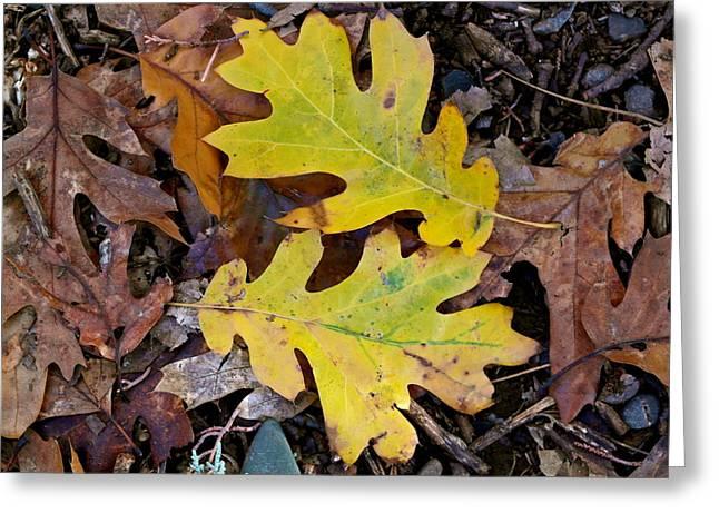 Golden Oak Leaf Duet Greeting Card