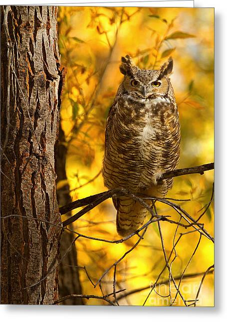 Golden Owl Greeting Card