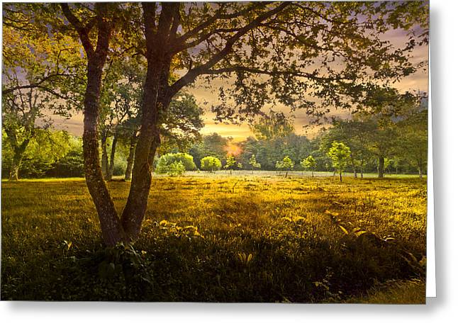 Golden Pastures Greeting Card by Debra and Dave Vanderlaan