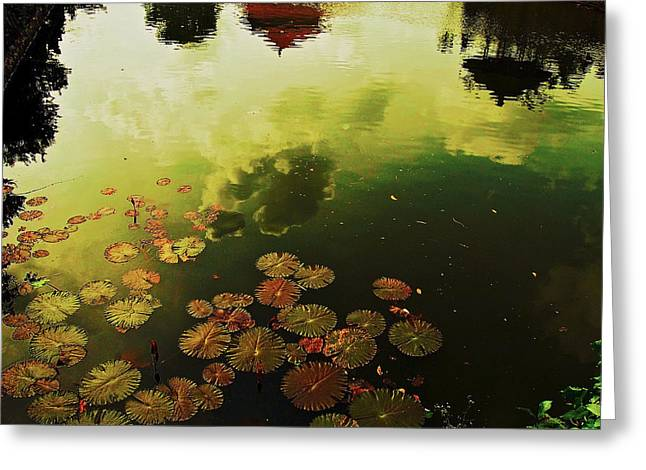 Golden Pond Greeting Card by Yen