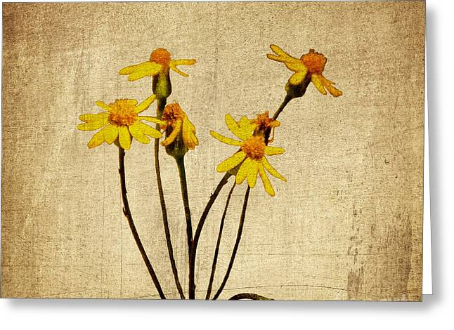 Golden Ragwort - Textured Greeting Card by Mary Carol Story