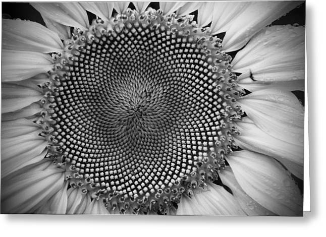 Golden Ratio In Black And White Greeting Card by Jodi Pflepsen