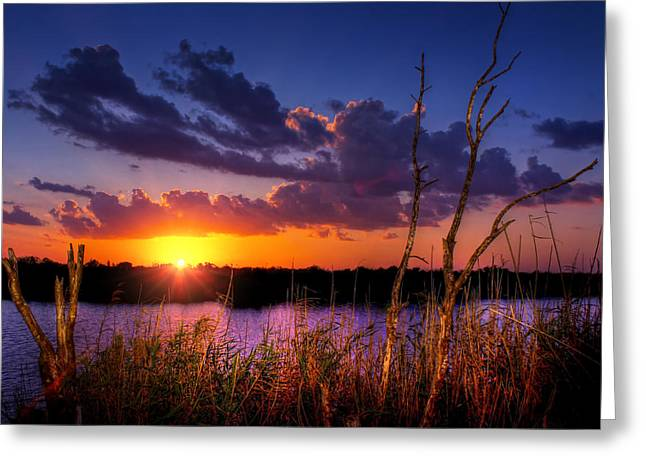 Golden Rays Greeting Card by Mark Andrew Thomas