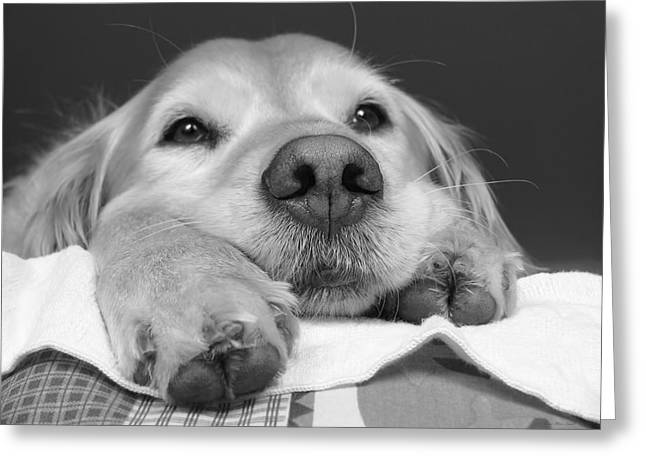Golden Retriever Dog I See You Greeting Card by Jennie Marie Schell