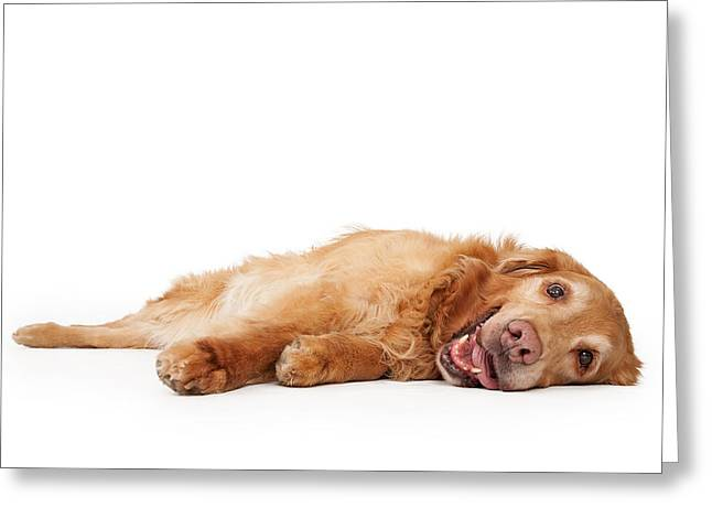 Golden Retriever Dog Laying Down  Greeting Card by Susan Schmitz