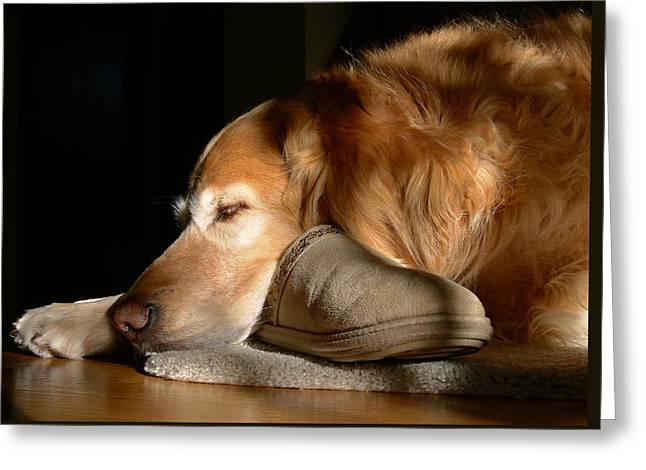 Golden Retriever Dog With Master's Slipper Greeting Card