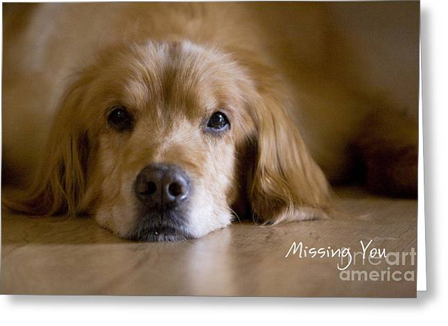 Golden Retriever Missing You Greeting Card by James BO  Insogna