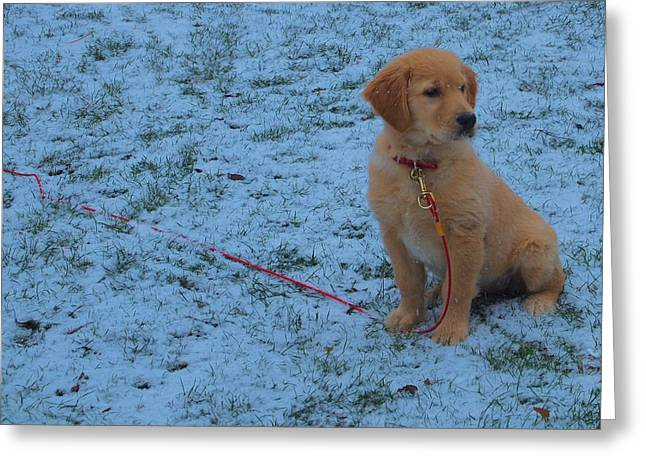 Golden Retriever Puppy In The Snow Greeting Card by Dan Sproul