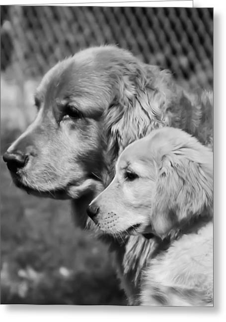 Golden Retrivers  Greeting Card by Paulina Szajek