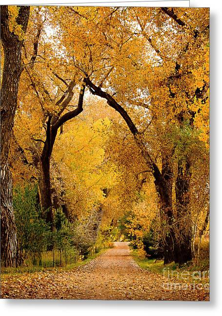 Greeting Card featuring the photograph Golden Roads by Steven Reed