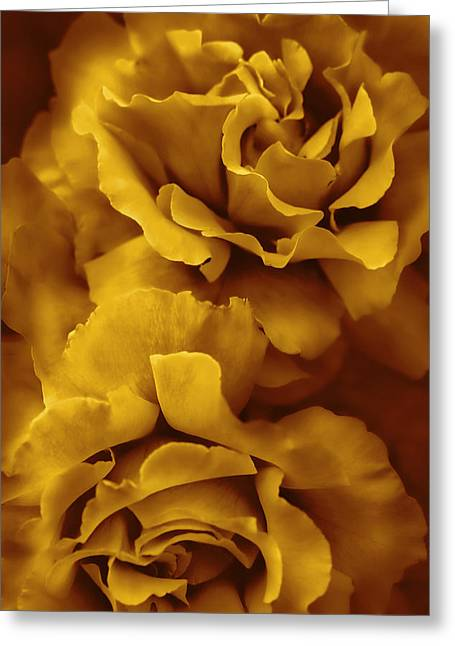 Golden Yellow Roses Greeting Card by Jennie Marie Schell
