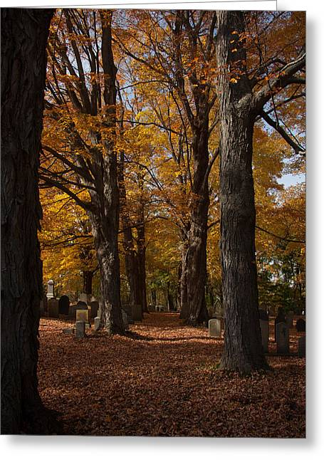 Greeting Card featuring the photograph Golden Rows Of Maples Guide The Way by Jeff Folger