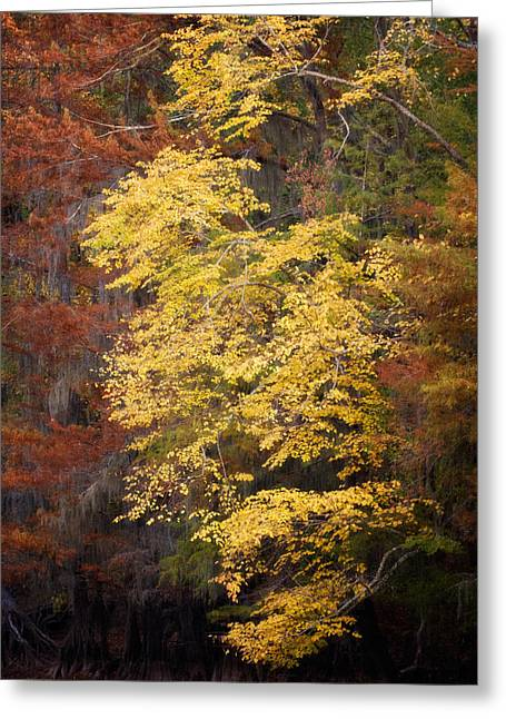 Greeting Card featuring the photograph Golden Rust by Lana Trussell