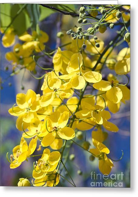 Golden Shower Tree - Cassia Fistula - Kula Maui Hawaii Greeting Card by Sharon Mau