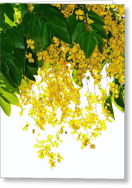 Golden Showers Flowers Greeting Card