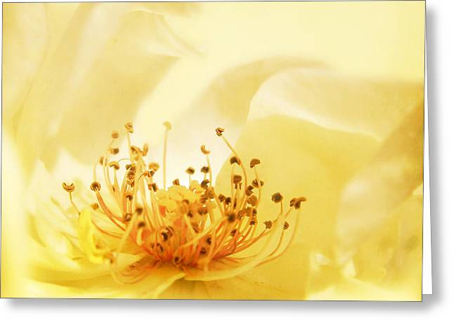 Golden Showers Rose Greeting Card by Deborah Smith