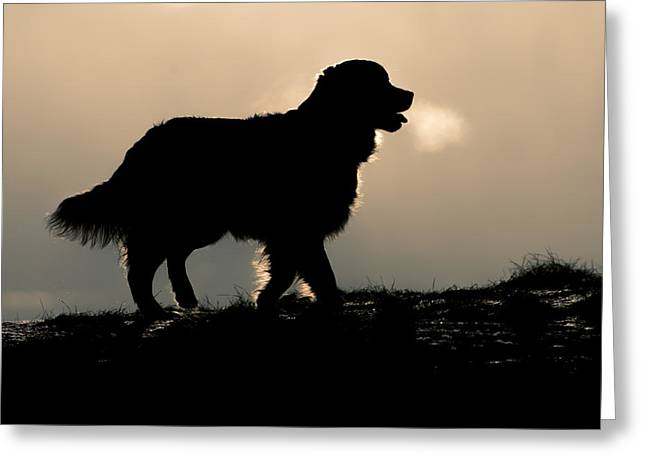 Golden Silhouette Greeting Card by Erkki Alvenmod