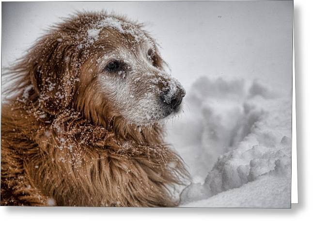 Golden Snow II Greeting Card by John Crothers