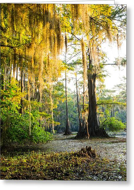 Golden Spanish Moss Greeting Card by Ellie Teramoto