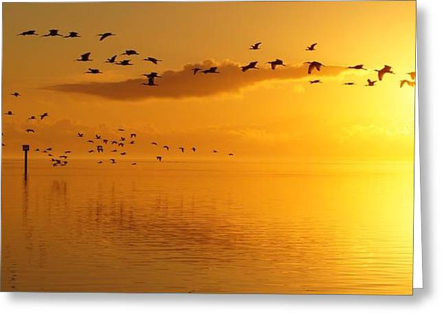 Golden Sunrise Flight Greeting Card