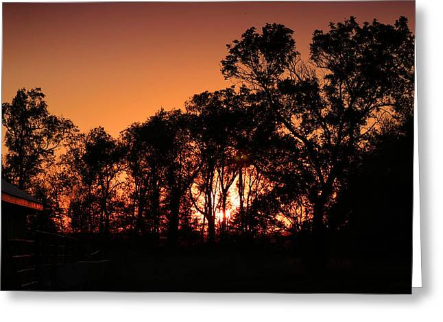 Golden Sunset Greeting Card by Rebecca Davis