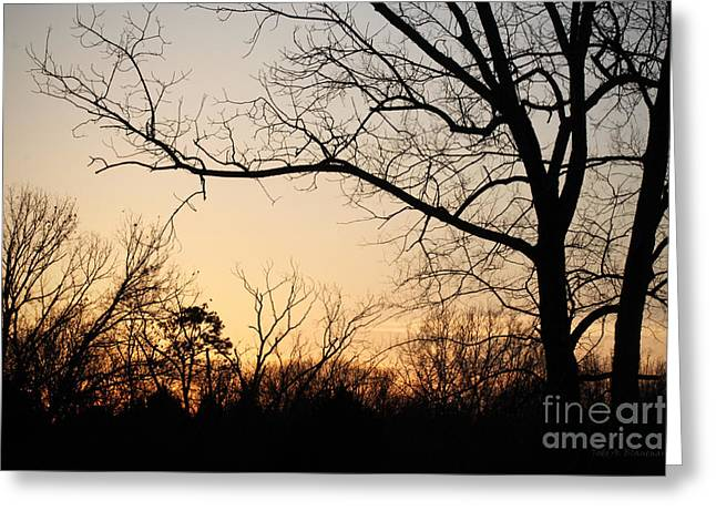Golden Sunset Greeting Card by Todd A Blanchard