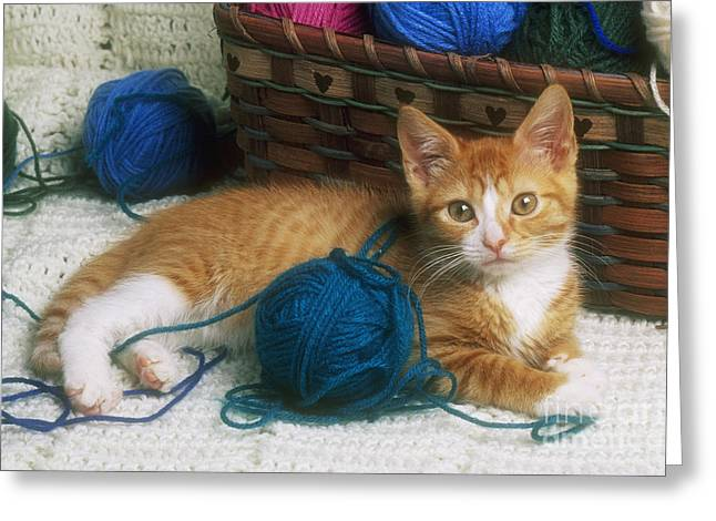 8 ball greeting cards page 3 of 7 fine art america golden tabby kitten greeting card m4hsunfo