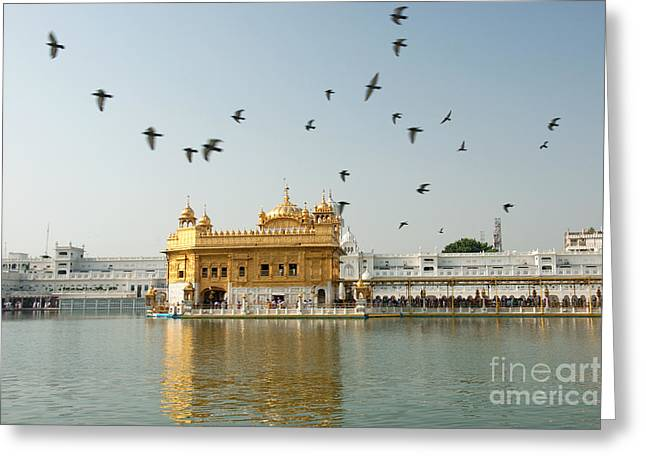 Golden Temple In Amritsar Greeting Card
