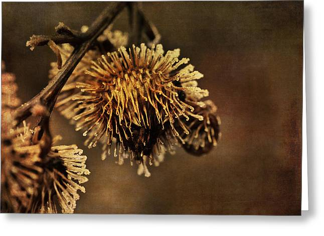 Golden Thistle Greeting Card