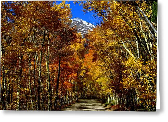 Greeting Card featuring the photograph Golden Tunnel by Karen Shackles