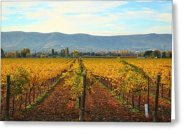 Golden Vineyards Greeting Card
