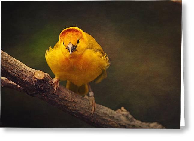 Golden Weaver Bird Greeting Card by Maria Angelica Maira