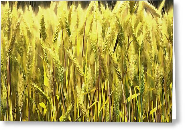 Greeting Card featuring the photograph Golden Wheat by Marion Johnson