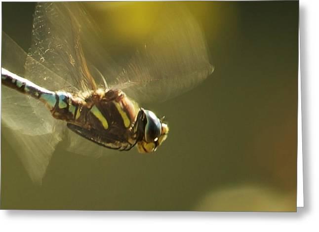 Golden Wings Greeting Card by Belinda Greb