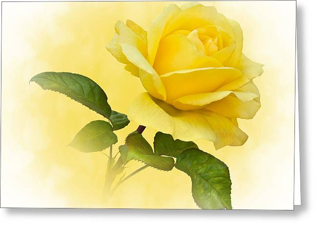 Golden Yellow Rose Greeting Card by Jane McIlroy